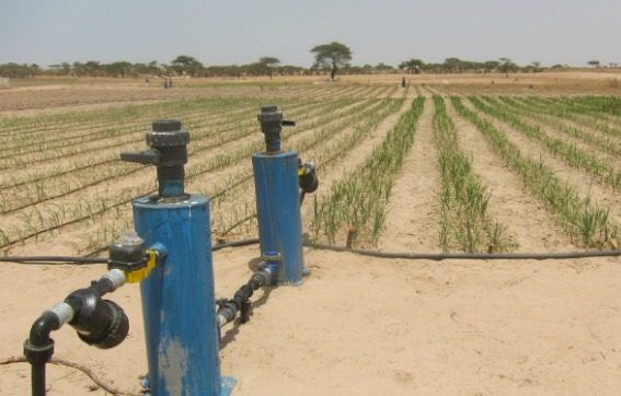 Irrigation equipment next to rows of plants growing in the desert