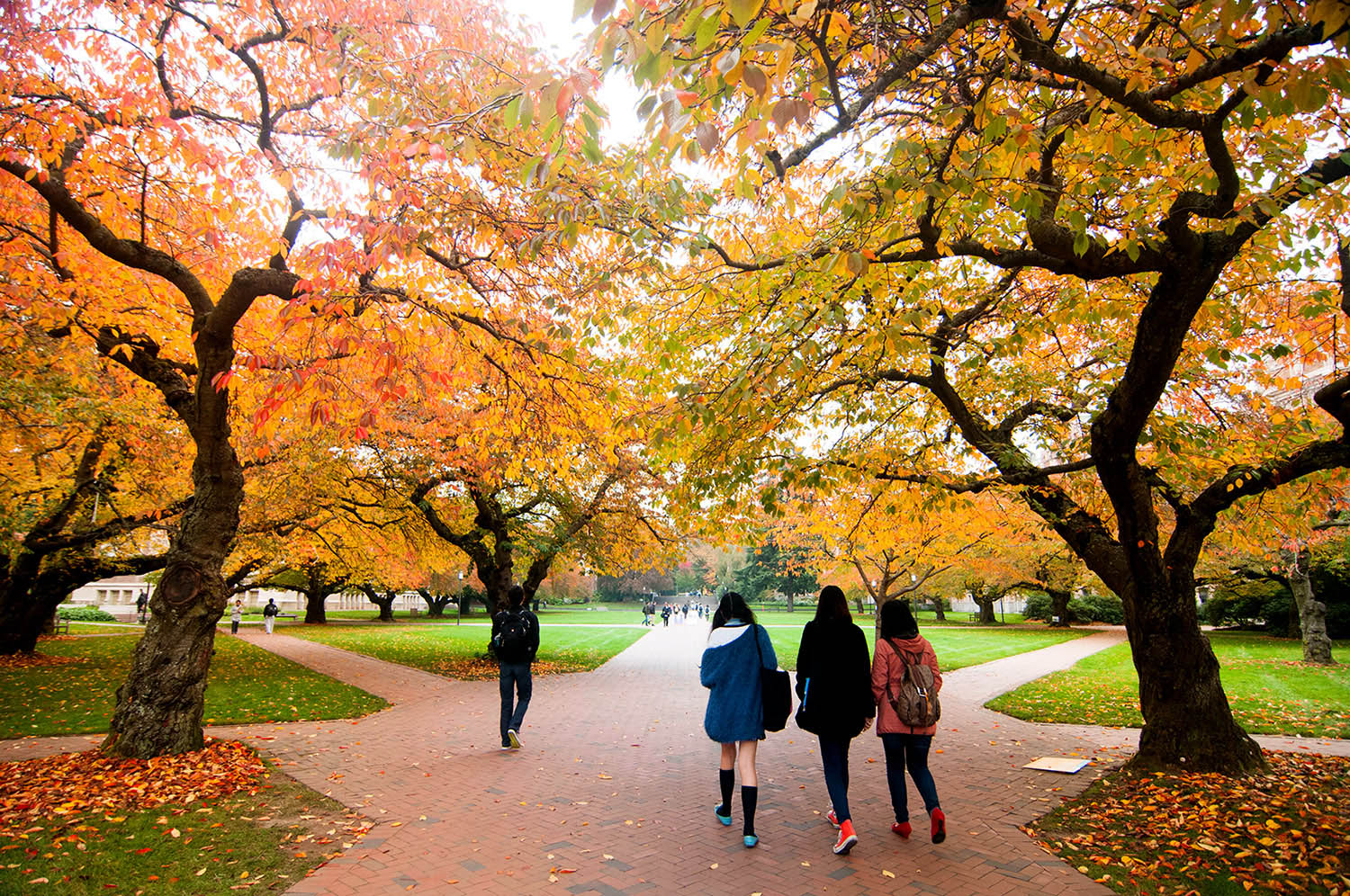 Fall in the Quad, University of Washington Seattle campus,