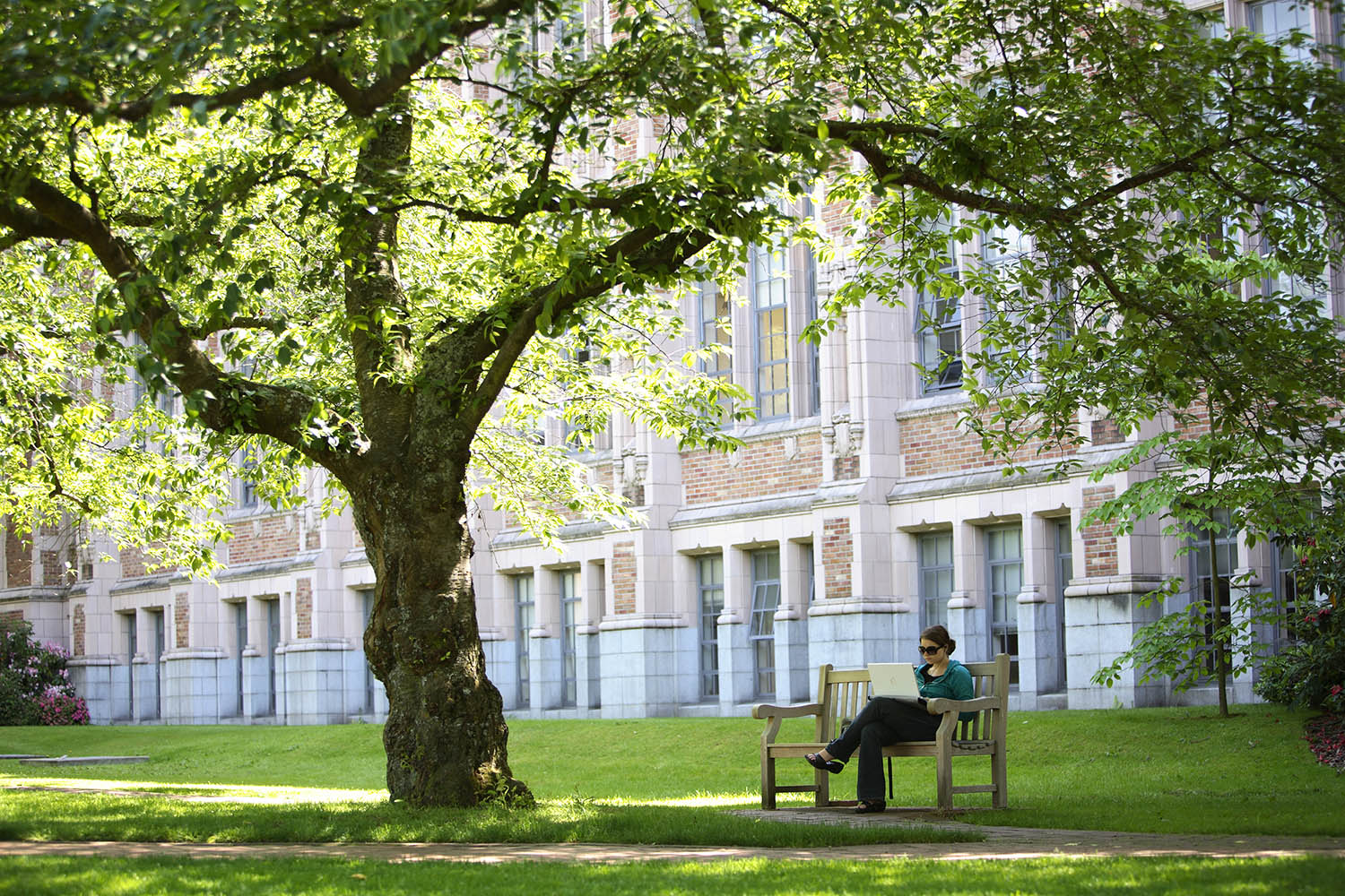 A student sits on a bench underneath a green tree on a sunny day