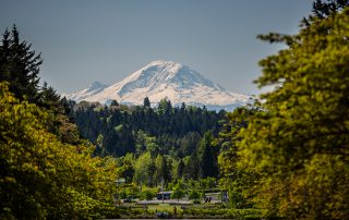 Photograph of Mount Ranier with evergreen trees flanking either side of the image and foliage in the foreground.